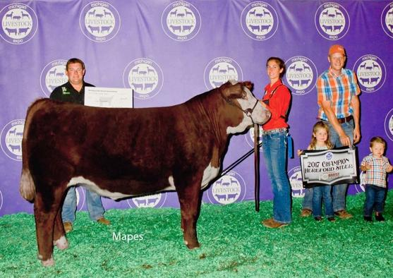 2017 MLE champion hereford steer