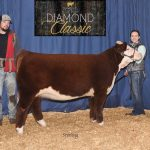 Michigan Livestock Expo 2019 Steer of the Year and MI Points Heifer